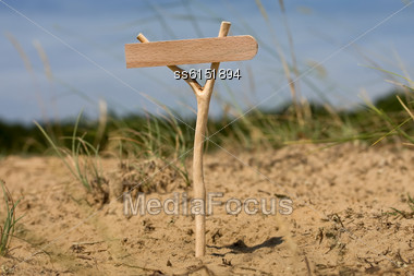 Wooden Pointer Standing In A Forest In The Grass With Blank Background For Text Stock Photo