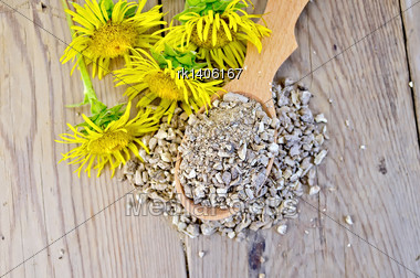 Wooden Spoon With Elecampane Root, Fresh Yellow Flowers Elecampane Against A Wooden Board On Top Stock Photo