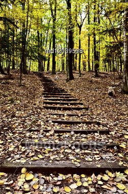 Wooden Stairs In Forest Sturgeon Bay Wisconsin Potawatomi State Park Stock Photo