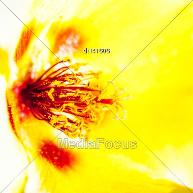Yellow Beauty, Abstract Floral Backgrounds With Shallow Depth Of Field Stock Photo