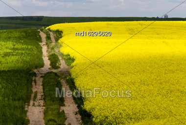 Yellow Canola Crop And Prairie Road Trail Saskatchewan Stock Photo