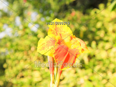 Yellow Flower At Sun Light Stock Photo