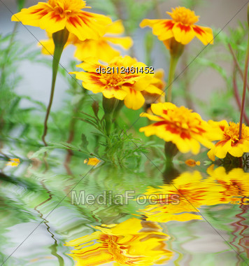 Yellow Flowers Near Water Surface With Ripples Stock Photo