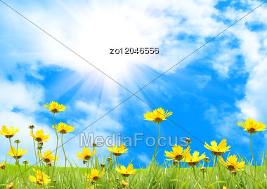 Yellow Meadow Under Blue Sky With Clouds Stock Photo