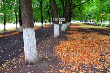 Yellow Sheet In Autumn Park Stock Photo