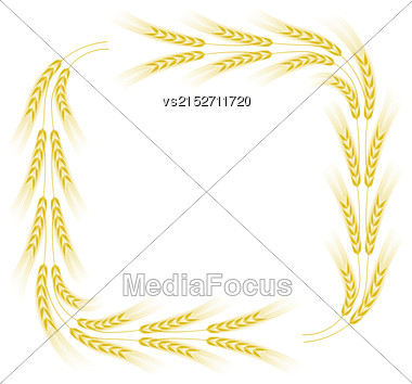 Yellow Wheat Frame Isolated On White Background Stock Photo