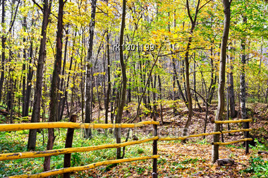 Yellow Wooden Fence On The Background Of Trees, Yellow Leaves And Green Grass Stock Photo