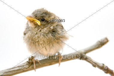 Young Bird Perched On A Branch Stock Photo