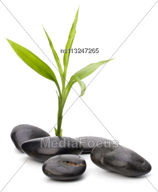 Zen Pebbles Path. Spa And Healthcare Concept Stock Photo