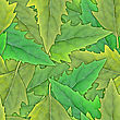 Floral Abstract Background Of Green Leafs. Seamless Pattern For Your Design. Close-up. Studio Photography. stock photo