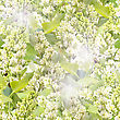 Leaf Stock Image: Abstract Background Of White Lilac With Green Leafs. Seamless Pattern For Your Design. Close-up. Studio Photography.