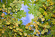 Stock Photo : Lush Pictures: autumn leaves floating in the sky