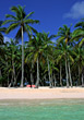 Stock Photo : Palm Stock Photo: Beaches with Tropical Palm Trees