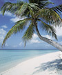 Stock Photo : Palm Stock Image: Beaches with Tropical Palm Trees