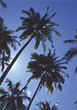 Stock Photo : Palm Stock Image: Beautiful Palm Trees