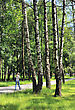 Stock Photo : Spring Stock Photography: Birch And Grass In Spring In A City Park