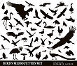 Birds Vector Silhouettes Set. EPS 10