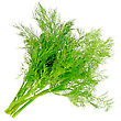 Bunch Of Dill On White Background. Isolated Over White stock photo