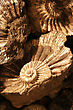 Stock Photo : Geological Stock Photo: Closeup Of Fossilized Ammonites