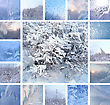 Stock Photo : Plants Stock Photography: Collage Of Ice Pattern On Winter Glass And Plants Under The Snow