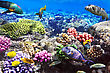 Landscape Coral And Fish In The Red Sea.Egypt stock image