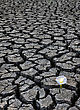 Drought Dried Up River Bed And Flower stock image