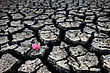 Stock Photo : Drought Stock Photo: Dried Up River Bed And Flower