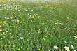 Landscape Field With Different Spring Flowers On A Carpet Of Green stock photo