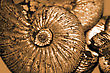 Stock Photo : Geological Stock Photo: Fossilized Ammonites Background