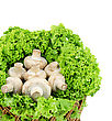 Stock Photo : Basket Stock Photography: Fresh Appetizing Mushrooms In A Basket .