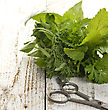 Stock Photo : Herb Stock Image: Fresh Herbs Bunch On Wooden Background