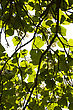 Green Lush Against Sunlight With Trees Branch In Silhouette View