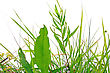 Stock Photo : Pasturage Stock Photo: Herb