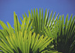 Stock Photo : Palm Stock Photography: Palm Leafs