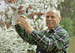 Stock Photo : Retiring Stock Image: Senior Pruning His Trees