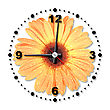 Stock Photo : Face Pictures: Single Orange Flower As A Office Clock Close-up Studio Photography