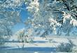 Stock Photo : Scene Pictures: Snowy Winter Scene