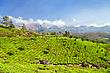 Day Tea Plantation In Munnar, India stock image