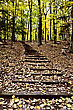Stock Photo : Hiking Pictures: Wooden Stairs In Forest Sturgeon Bay Wisconsin Potawatomi State Park
